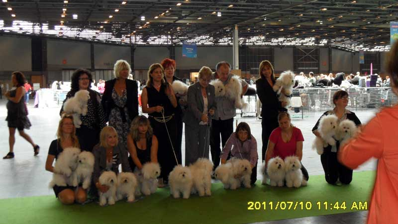 bolognese dogs at the world dog show 2011